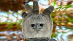 The Harpy Eagle: Terrifying Apex Predator or Creepy Halloween Costume?