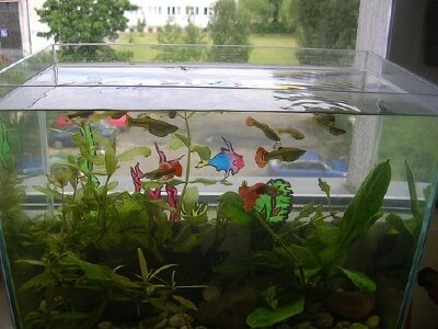 Aquarium Filter Designs Undergravel Filters Howstuffworks