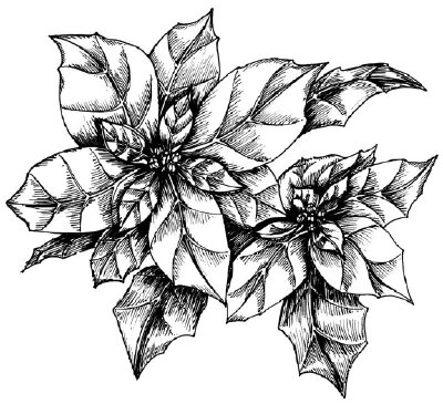 How To Draw A Poinsettia Howstuffworks