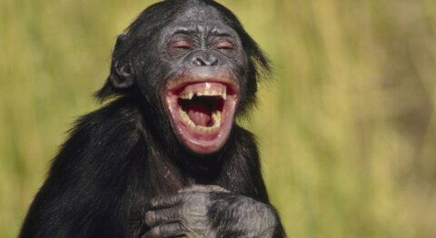 Do animals laugh? | HowStuffWorks