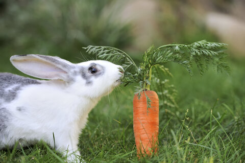 Rabbits Eating High Resolution Stock Photography and Images - Alamy