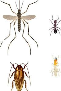 Termites Vs Ants Howstuffworks