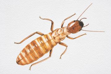 Wood Termite Damage Howstuffworks