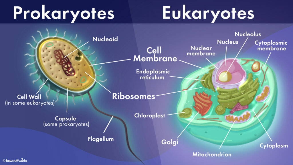 What's the Difference Between Prokaryotic and Eukaryotic Cells?