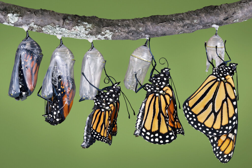 Butterfly Kinesiology: Keeping Warm and Staying Aloft