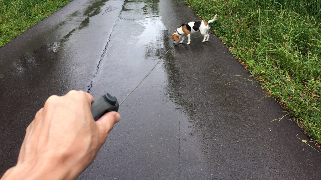 Get Rid of Your Retractable Dog Leash, Stat! — And More On Walking Dogs