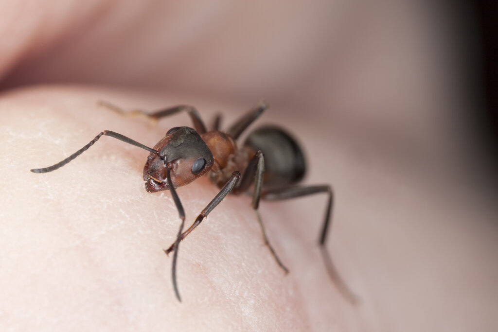 Treating Fire Ant Bites Howstuffworks