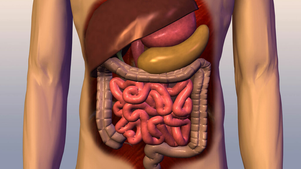 10 Grossest Things in Your Body Right Now