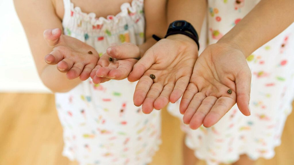 How to Get Rid of Ladybugs In Your House