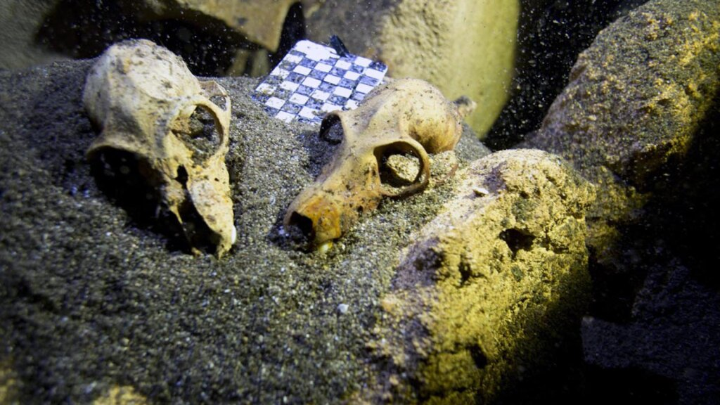 River-bottom Bones: The Strange World of Underwater Fossil Hunting