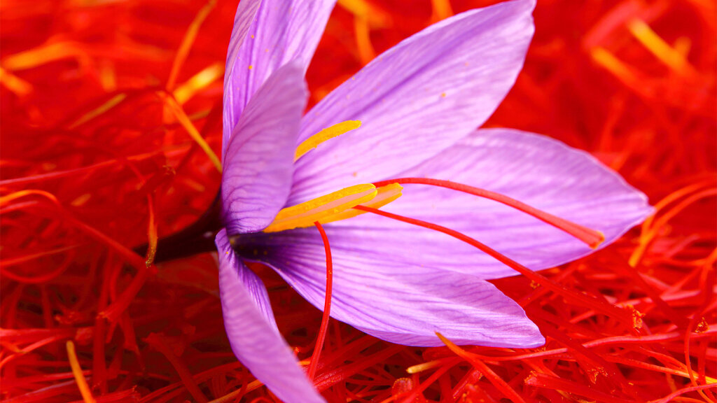 Why Is Saffron More Expensive Than Gold?