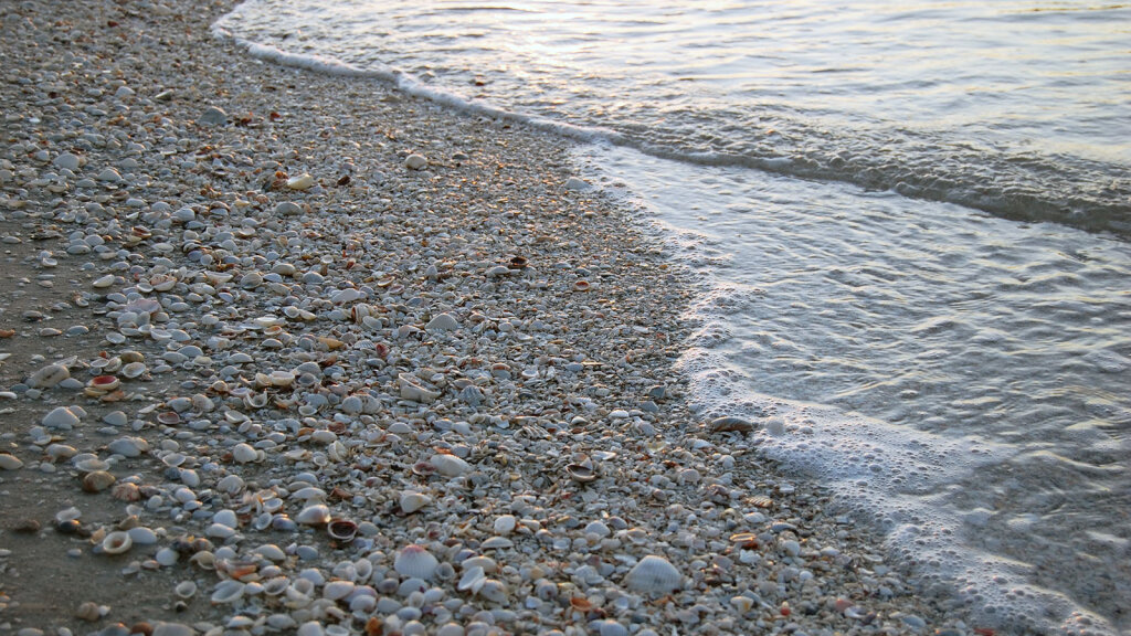 Where Have All the Seashells Gone? | HowStuffWorks