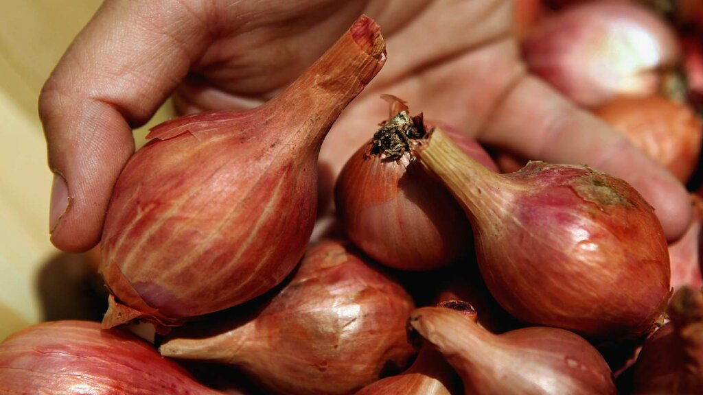 Shallots Are Onions' Cute Little Cousins