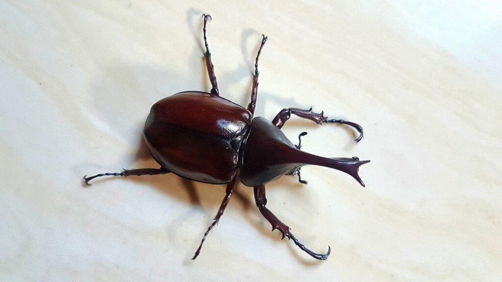 4. How to Get Rid of Weevils
