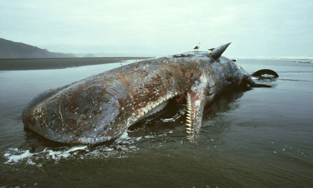What Happens To Whales When They Die?