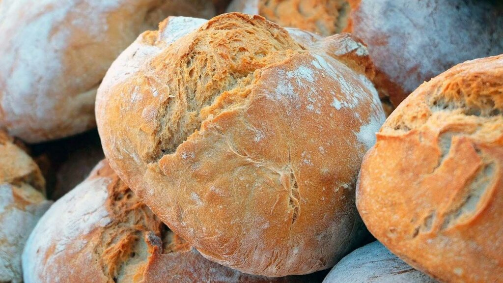 Yeast Is the Magic Microbe That Makes Bread Rise