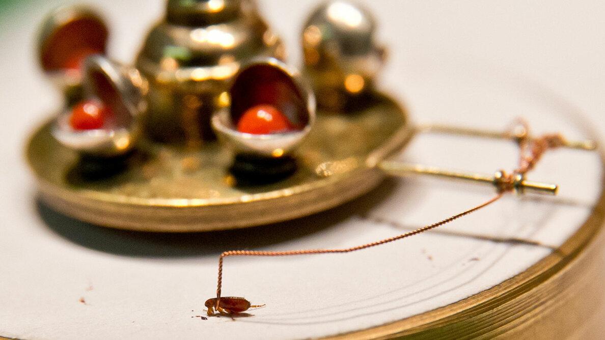 flea pulling carousel