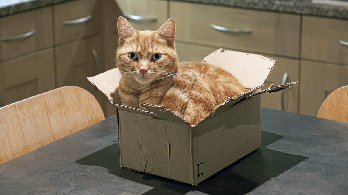 'If I Fits I Sits': The Science Behind Cats Sitting in Squares