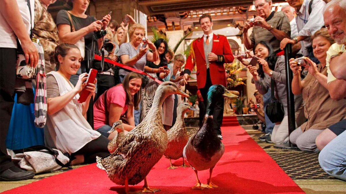 The Duckmaster Rules the Roost at the Peabody Hotel