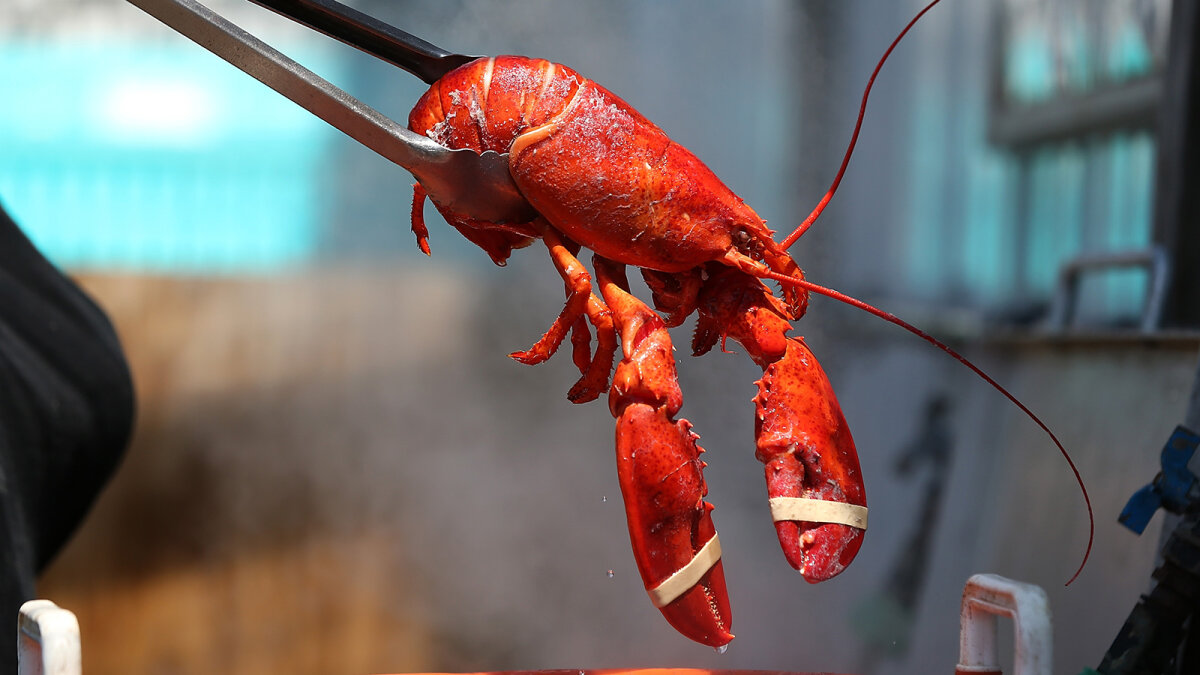 Why Is Lobster So Expensive, and Will it Stay That Way?