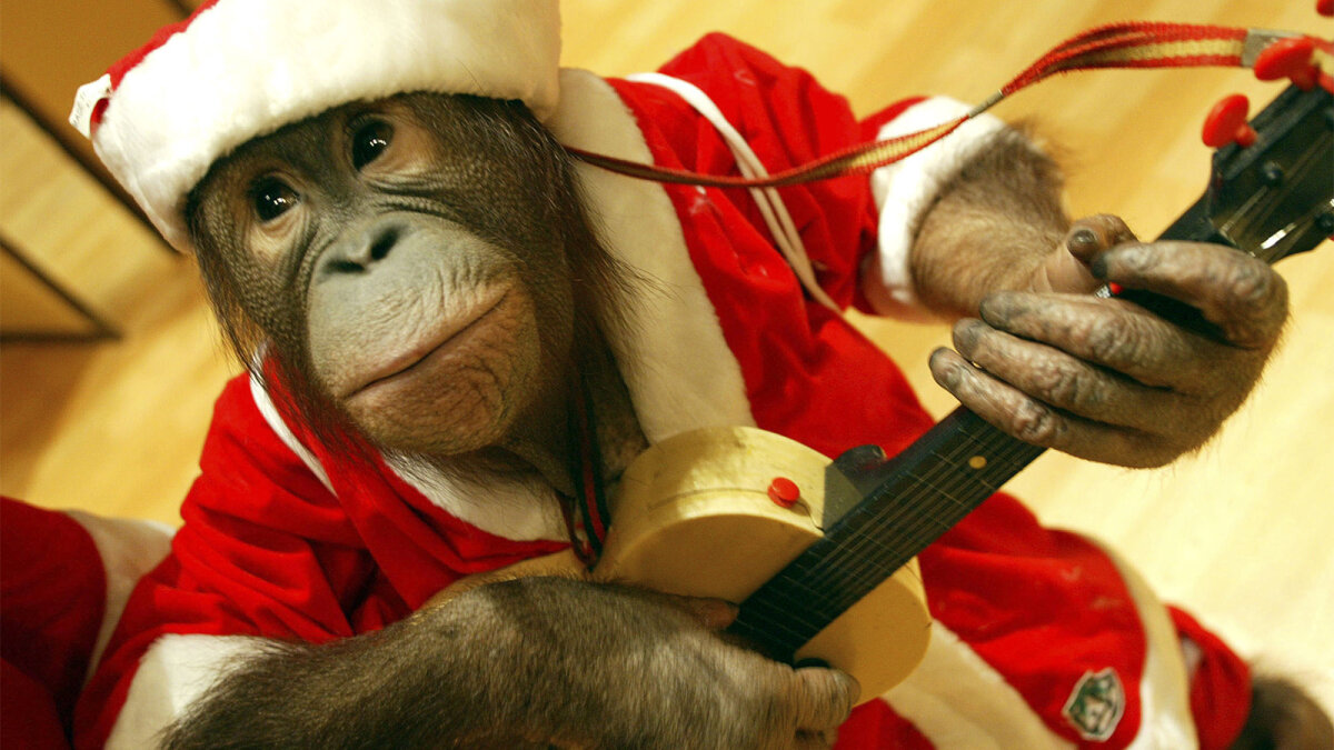 6 Reasons Monkeys Should Never Be Pets Howstuffworks