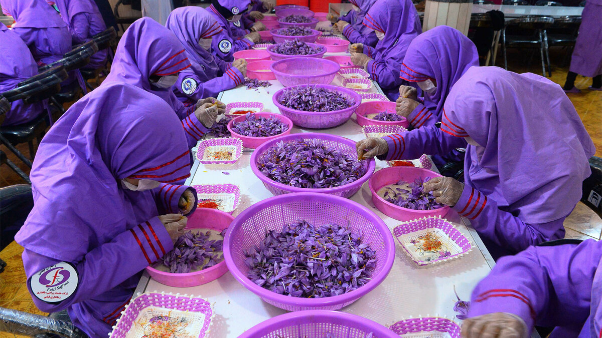 Why Saffron Is More Expensive Than Gold
