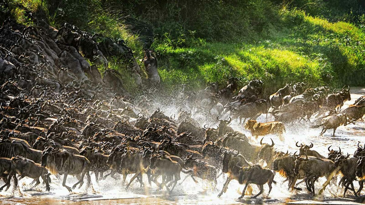 A Guide to the Serengeti, Home of the Great Migration