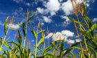 10 Edible Biofuels