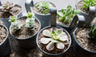 10 Tips for the Best Container Garden on the Block