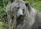 15 Tips for Surviving a Bear Encounter
