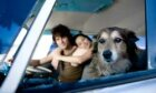 5 Safety Tips for Traveling With a Pet in the Car