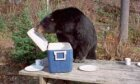 10 Ways to Attract Bears to Your Campsite
