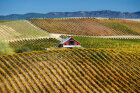 Ultimate Guide to American Wines