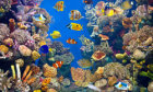 5 Aquarium Cleaning Tips