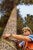 Arborists