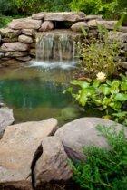 How to Create a Backyard Wildlife Habitat