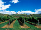 Bay of Plenty Wine Region