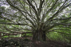 What is the biggest family tree ever assembled?