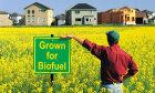Biofuel Quiz