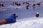 How Bird Photography Works