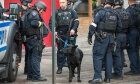 Quiz: How do bomb-sniffing dogs work?