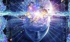 Is the human brain evolving?