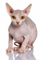 Cats with Hair Loss