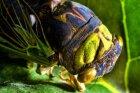 How Cicadas Work