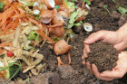 Fact or Fiction: Composting Quiz