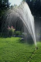 How to Conserve Water While Still Keeping a Beautiful Garden