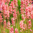 10 Perennials for the Northeast
