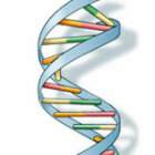 ­How DNA Works