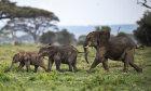 The Ultimate Elephant Quiz