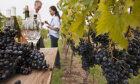 Vineyards and Vintages: The Wine Varietal Quiz